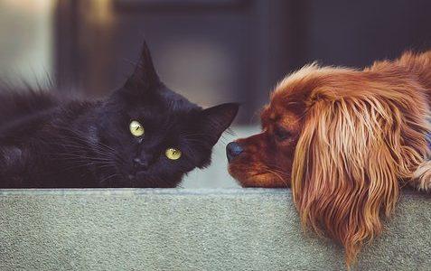 Empatia wśród zwierząt: Jak zwierzęta przekazują sobie emocje?